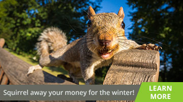 Squirrel away your money